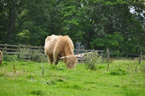 Scotland_05-16