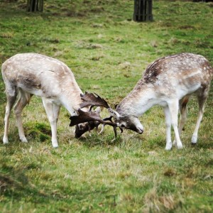 RichmondPark_01