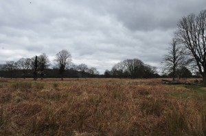 RichmondPark_06
