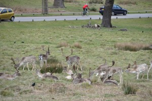 RichmondPark_15