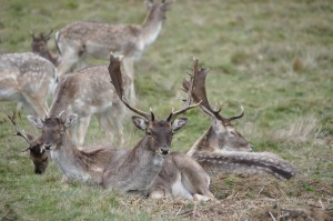RichmondPark_16