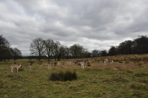RichmondPark_20
