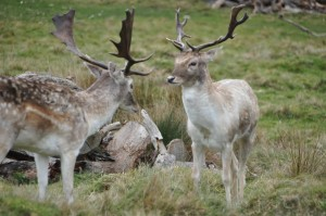 RichmondPark_22