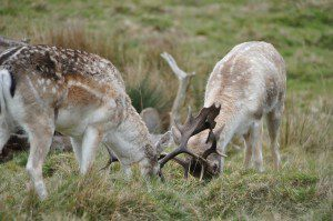 RichmondPark_23