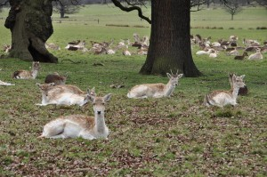 RichmondPark_25