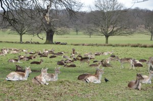 RichmondPark_26