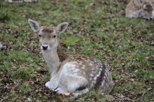 RichmondPark_32