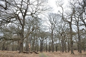 RichmondPark_34