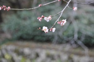 tokyo_d3_5