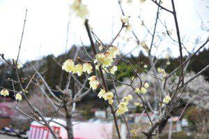 tokyo_d3_6