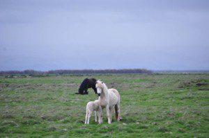 Iceland_02-12