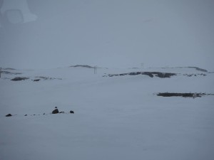 Iceland_05-14