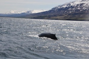 Iceland_07-05