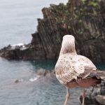 2018意大利之旅— Day 5 Cinque Terre 五漁村